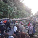 Pohon Tumbang, Jalan Negara Lintas Gunung Kerambil Sempat Macet