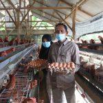 BUMG Usaha Bersama Gampong Krueng Kalee Pasie Raja Panen Perdana