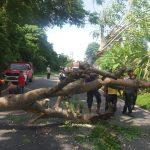 Lalu Lintas di Jalan Negara Tapaktuan-Samadua Terputus Beberapa Jam