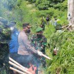 Pabung Kodim 0101, Dampingi Komjen Pol.Dr. Petrus Reihanrd G (KA BNN RI) Dalam Pemusnahan Ladang Ganja