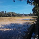 Gampong Ladang Gelar Tanam Serentak, Ketersediaan Pupuk Masih Terbatas