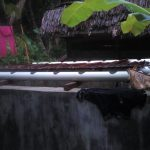 Budidaya ikan Tahap ke Tiga Di Gampong Ladang Gagal Panen