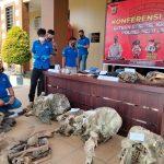 Kepolisian Resor Aceh Jaya Tangkap 11 Tersangka Pembunuhan 5 Individu Gajah di Aceh Jaya