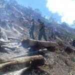 Kebakaran Hebat Hanguskan 15 Hektar, Hutan di Aceh Tengah Terancam Punah