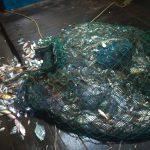 Satu Unit Kapal Beserta ABK Diamankan, Tangkap Ikan Pakai Pukat Harimau